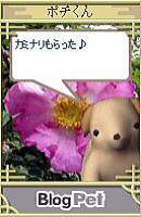 Pochi051_2