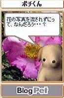 Pochi101_2