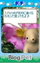 Pochi08071001