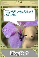 Pochi08071303