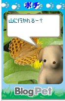 Pochi08081901