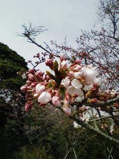 今日は、お花見!